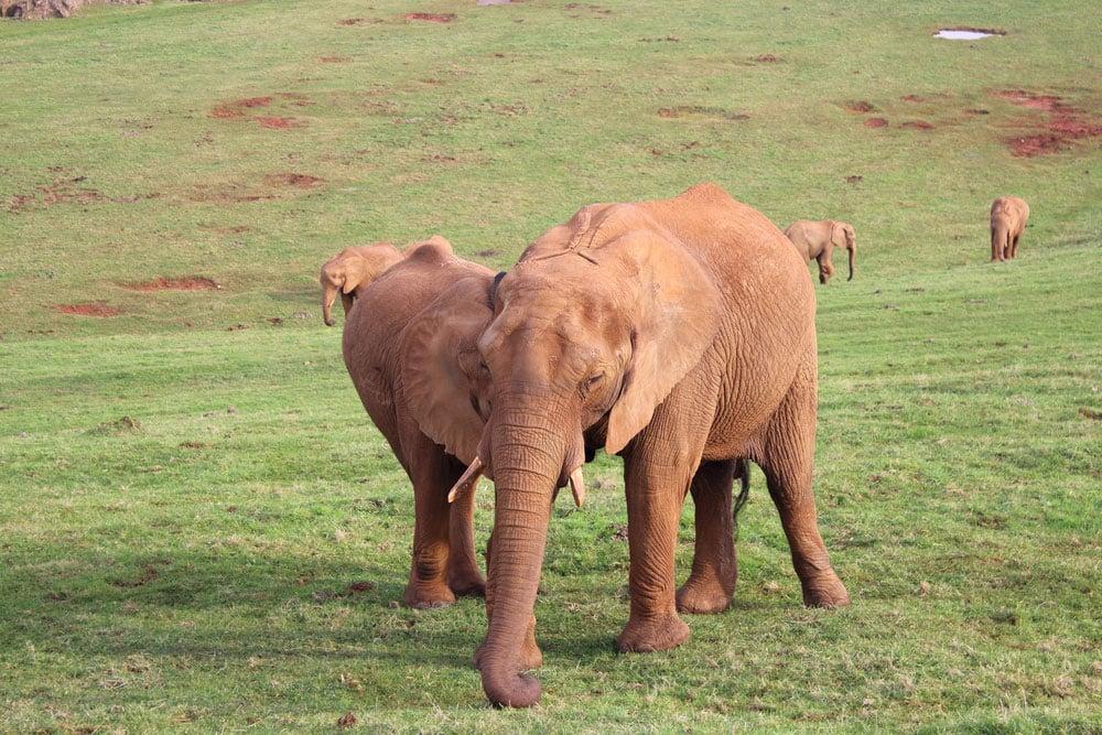 Elefantes en el parque de Cabárceno en Cantabria