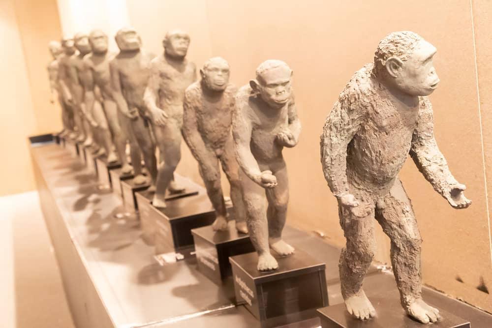 Detalle de esculturas de la Evolución HUmana en museo de Burgos capital