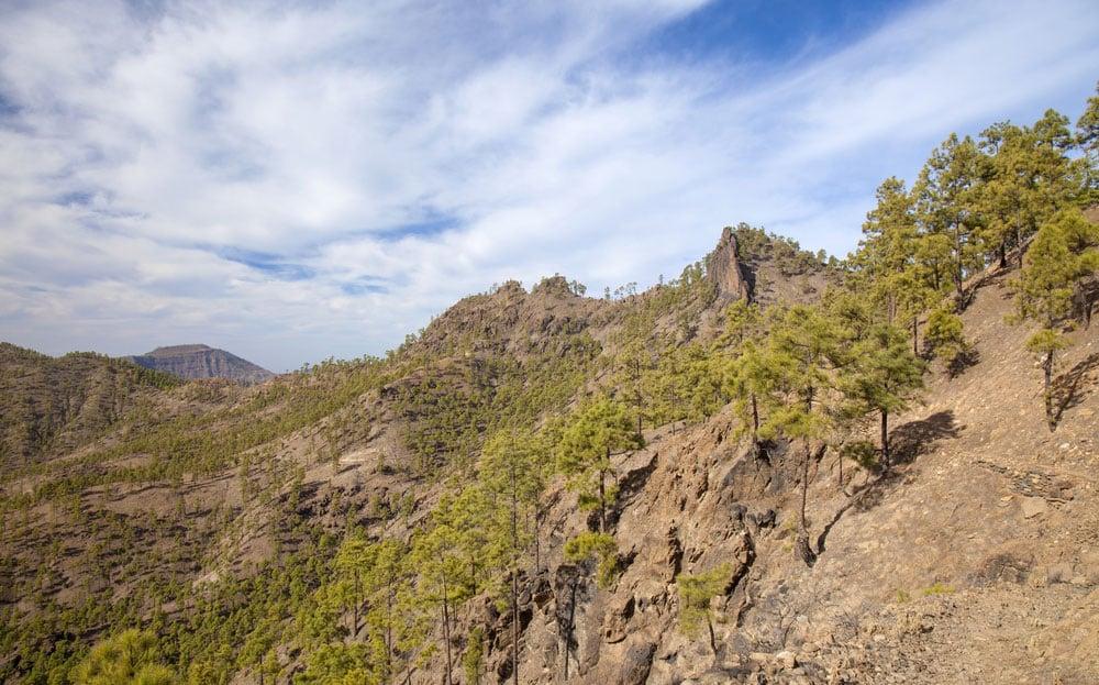 Pinos y rocas en el interior de la isla de Gran Canaria